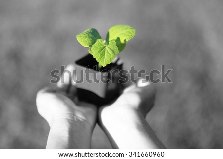 Human hands holding green small plant with blur background. new life concept. copy-space - stock photo