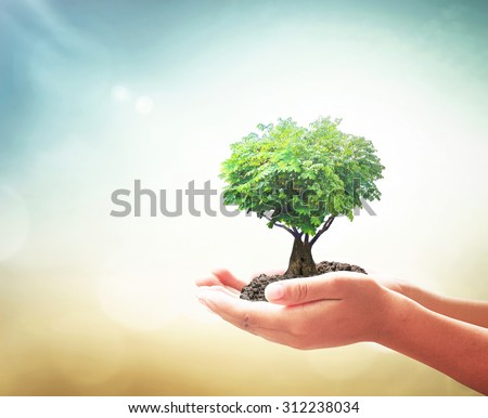 Human hands holding growing tree, plant in heart shape with soil on blurred abstract beautiful ocean, green forest on colorful sunset background. Ecology, World Environment Day, Organ Donation concept - stock photo