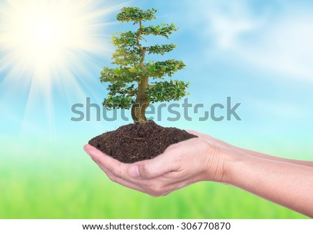 Human hands holding large trees growing in soil on Nature Backgrounds