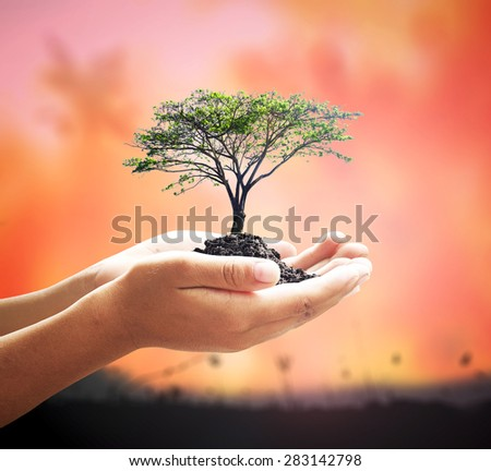 Human hands holding medium plant or big tree with soil over blurred forest fires background. World Environment Day Reforestation Ecology CSR Earth Hour Eco Friendly Love Trust concept. - stock photo