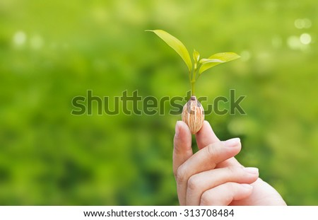 human hands holding plant growing from seed on green nature background, blank text - stock photo