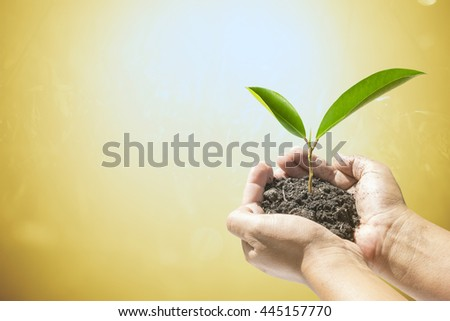 Human hands holding small plant over white background. Ecology concept.