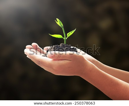 Human hands holding small tree on blur beautiful forest background. Ecologic  World Environment Day CSR Earth Eco Friendly Trust Begin Nature Food Idea Start Holy Bible Earth Grow Dark Dirt concept.