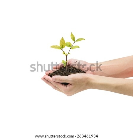 Human hands holding sprout isolated on white background - stock photo