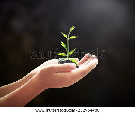 Human hands holding young plant over blurred soil background. Ecology concept. - stock photo