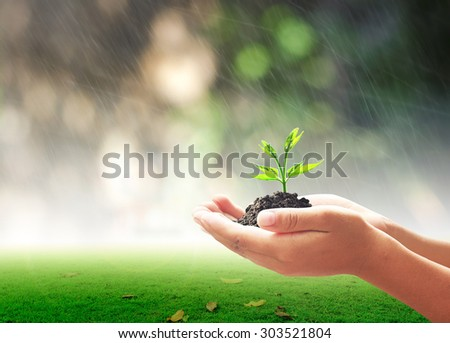 Human hands holding young plant with soil over blurred rainy with nature background. Ecology World Environment Day CSR Seedling Go Green Eco Friendly Earth Health Care Food Garden New Life concept. - stock photo