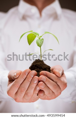 Human hands holding young spring sprout - closeup shot