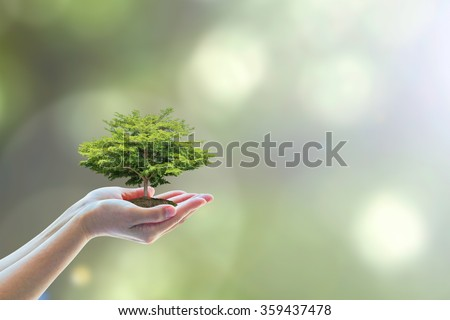 Human hands planting perfect growing stem tree blur natural background greenery leaf: Arbor reforestation sustainable bio eco forest saving environment harmony ecosystem conservation csr esg campaign - stock photo