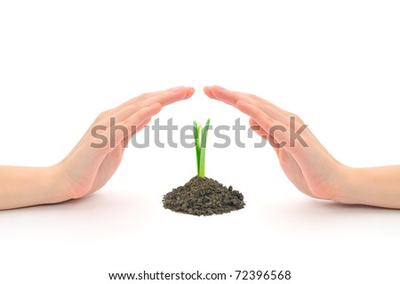 Human hands sheltering a young plant (snowdrop), studio shot - stock photo