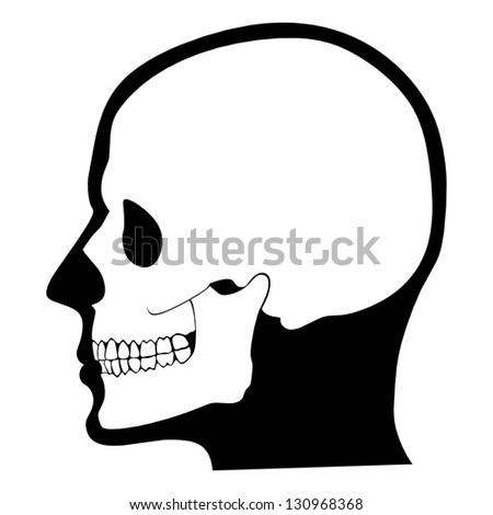 Skull Profile Stock Im...