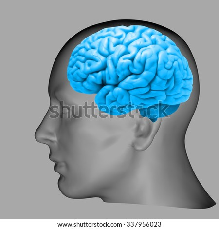 human head with blue brain and Grey  background