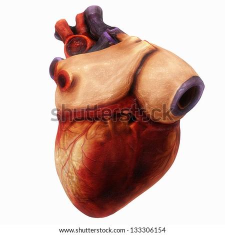 Human Heart - stock photo
