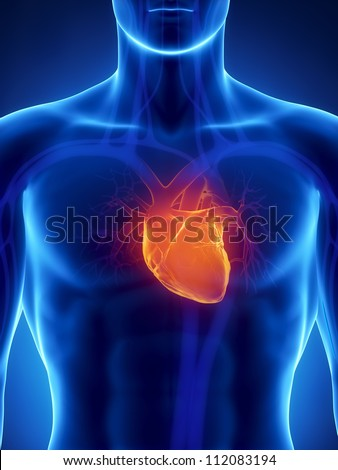 Human heart anatomy     **** Also as footage available in my portfolio - stock photo