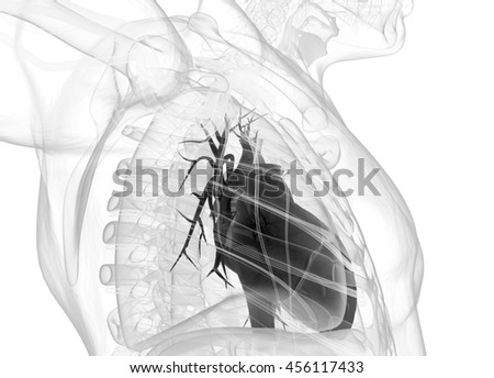 Human heart. 3d illustration.