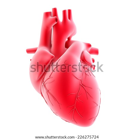 Human heart. 3d illustration. Isolated, contains clipping path - stock photo