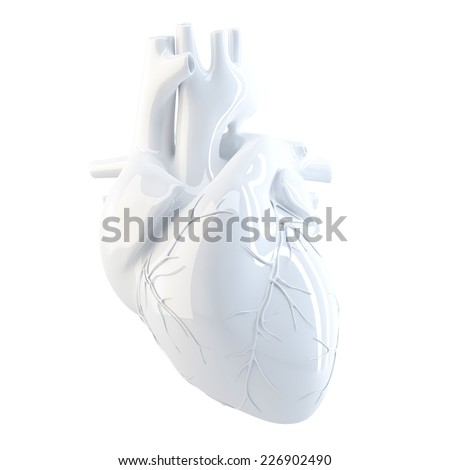 Human Heart. 3d render. Isolated over white, contains clipping path. - stock photo