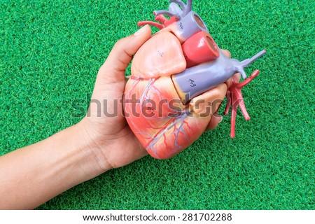 human heart model on green grass background - stock photo