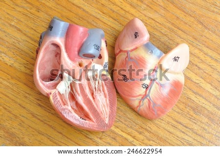 human heart model on wooden background  - stock photo