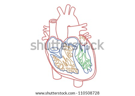 Human Heart structure - stock photo