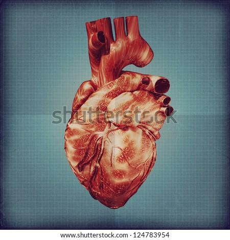 Human heart vintage blueprint. Grunge medical backgrounds - stock photo