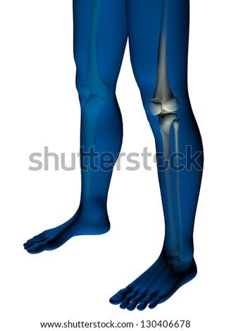 Human knee anatomy medical illustration - stock photo
