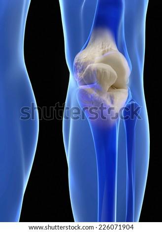 Human knee anatomy with femur, tibia and fibula bones under X-rays isolated on black.  - stock photo