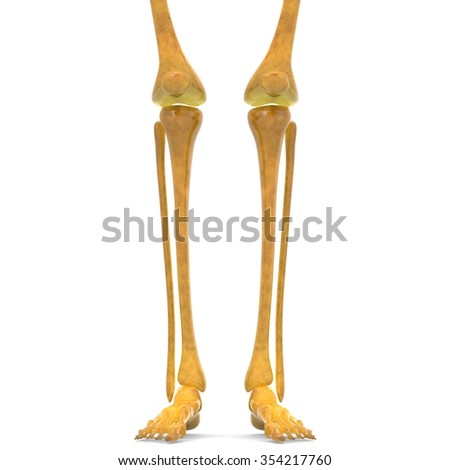 Human Legs with Knee Joints - stock photo