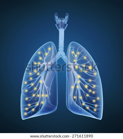 Human lungs and bronchi and oxygen in x-ray view - stock photo