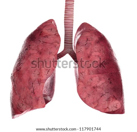 Human lung Stock Photos, Images, & Pictures | Shutterstock