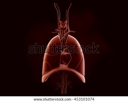 Human lungs and trachea. 3d render