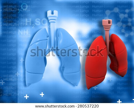 Human lungs  on abstract medical  background  - stock photo