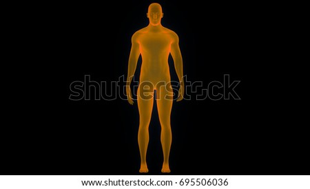 Human Male Muscle Body Anatomy 3d Stock Illustration 695506036