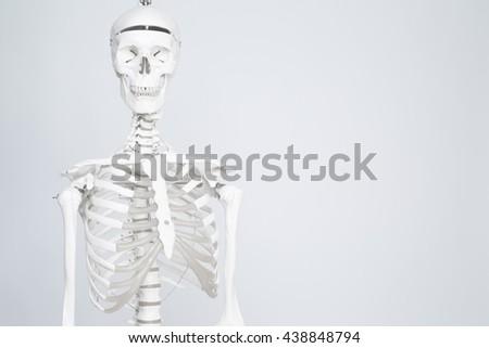 Human medical skeleton on the white background. - stock photo