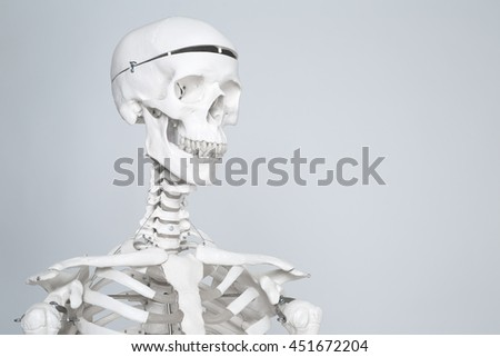 Human medical skeleton on the white background.
