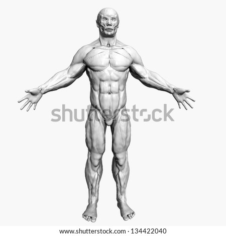 Human Muscle Anatomy - stock photo