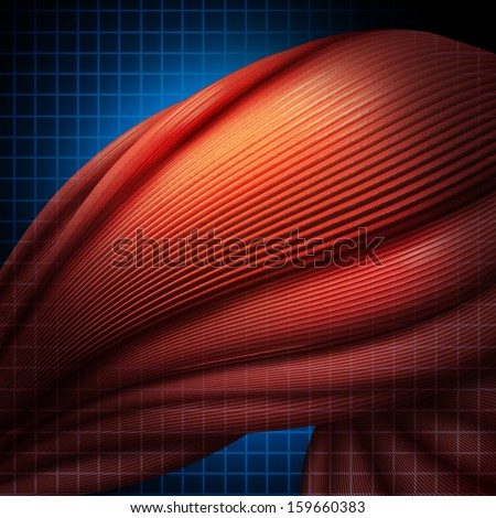 muscle fiber stock images, royalty-free images & vectors, Muscles
