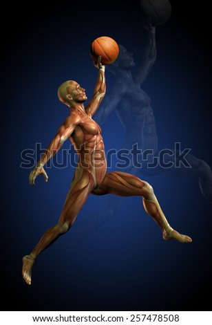 human musculature basket - stock photo