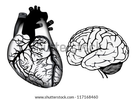 human organs. human heart and brain. vector medicine illistration - stock photo
