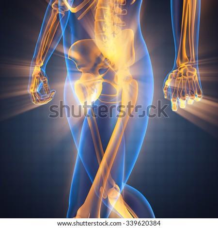 human radiography scan - stock photo