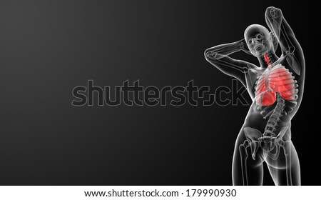 Human respiratory system in x-ray view - bottom view - stock photo