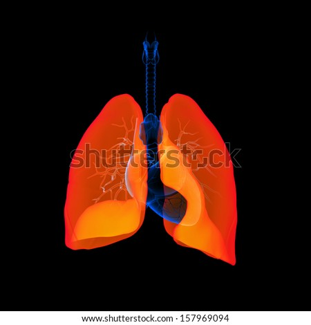 Human respiratory system lung red colored - front view - stock photo