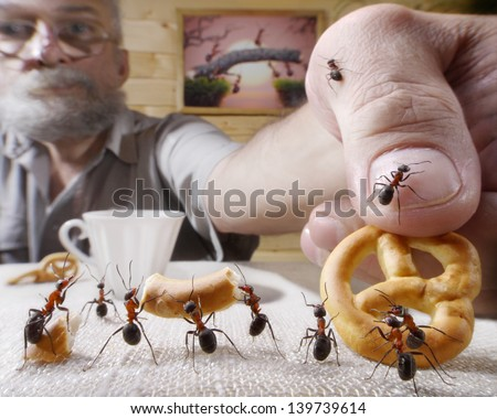 human rewards ants with bake, ant tales - stock photo