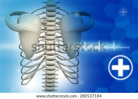 Human rib on medical background	 - stock photo