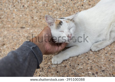 Human's hand scratching a white cat. - stock photo