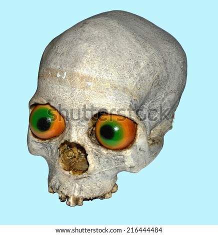Human scull - stock photo