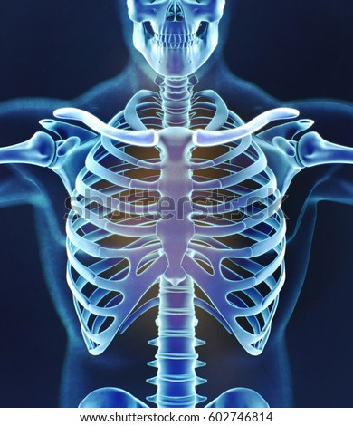 human skeleton anatomy torso ribs xray stock illustration, Skeleton
