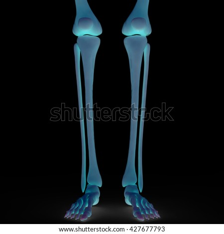 Human Skeleton Bones Anatomy. 3D