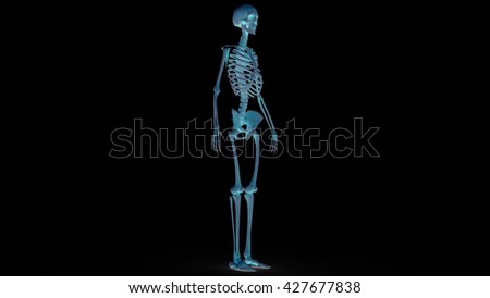 skeleton boxing stock illustration 11659081 - shutterstock, Skeleton