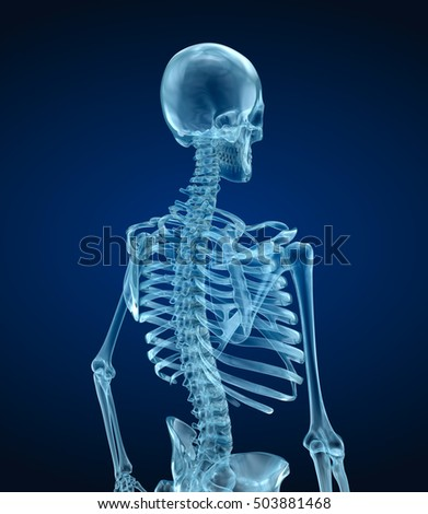 Human skeleton - head, Medically accurate 3d illustration .