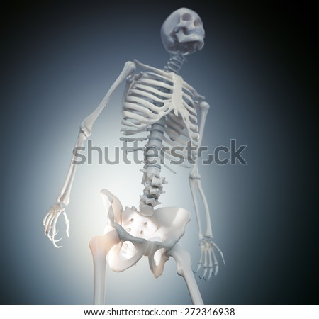 Human skeleton - hip and  - stock photo